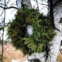 Cedar Wreath - Undecorated - 18